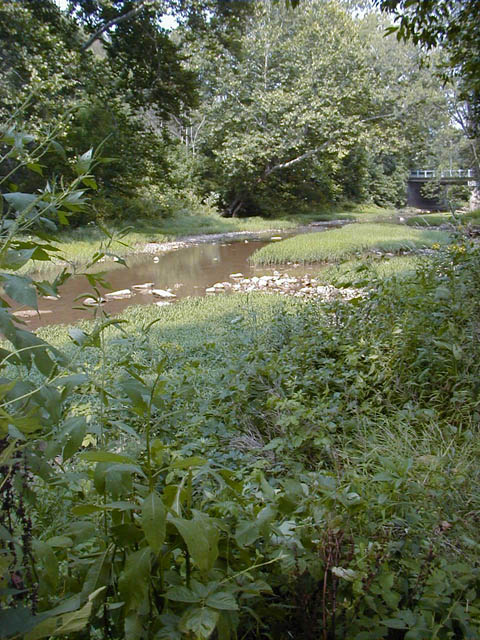 Yellow Creek, Hammondsville, Rosie Elliott Schoop's Final Resting Place